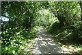 SH5058 : Dappled light, Bryngwyn Branch slate trail by Christine Johnstone