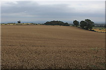 SE2094 : Rolling Countryside East of Craggs Lane by Chris Heaton