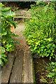 ST3504 : Bog garden, Forde Abbey by Derek Harper