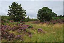 NH8620 : Boggy Ground by Anne Burgess