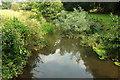 ST3505 : River Axe near Forde Abbey by Derek Harper