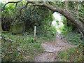 SZ5379 : Bridleway junction by Appuldurcombe Park wall by Robin Webster