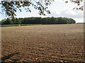 SE9644 : Over  planted  field  to  Gabbetis's  Plantation by Martin Dawes