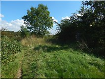 NS5161 : Path on Hurlet Hill by Lairich Rig