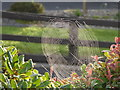 H4672 : Early morning spider's web, Campsie, Omagh by Kenneth  Allen