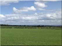 NZ2911 : Farmland near Hurworth-on-Tees by David Robinson