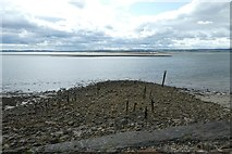 NU1341 : Wooden remains near Cockle Stone by DS Pugh