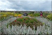 NU1341 : Gertrude Jekyll Garden by DS Pugh