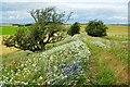 SO2868 : Offa's Dyke Path below Hengwm Hill by Jeff Buck