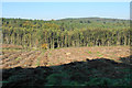 SK0413 : Cleared forest on Cannock Chase by Bill Boaden