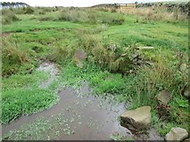 NT6549 : Wee silted-up cundy on Harelaw Moor near Westruther in the Scottish Borders by ian shiell
