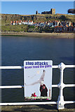 NZ8911 : Never feed the gulls at Whitby by Stephen McKay