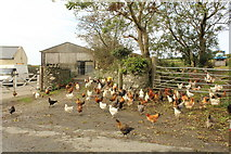 SC2270 : 'There's a hen party going on' by Richard Hoare