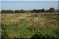 SK0612 : Fallow field near Tithe Barn Farm by Bill Boaden