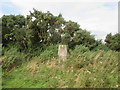 NT6720 : Trig  point  in  field  hedge  and  gorse by Martin Dawes