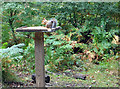 SO6010 : Squirrel on the Table by Des Blenkinsopp