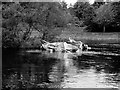 NS3981 : Sunken Boat, River Leven at Balloch by David Dixon
