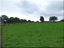 SJ9995 : Mottram Cemetery by Gerald England
