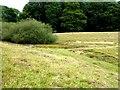SU9623 : Dewpond in Petworth Park by Oliver Dixon