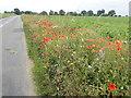 TG4104 : Colourful wildflower verges by Eirian Evans
