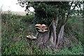 TF0327 : Treestump in verge by Bob Harvey