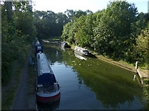 SP6989 : Branch of the Grand Union Canal Foxton by Chris Gunns