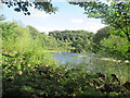 NT5216 : River  Teviot  from  Borders  Abbeys  Way by Martin Dawes