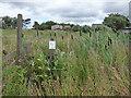 SD9627 : Overgrown footpath near Blackshaw Head by Stephen Craven