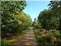 TQ5608 : Track, Wilmington Wood by Simon Carey