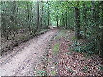 SP8906 : Track through Great Widmoor Wood by Peter Wood