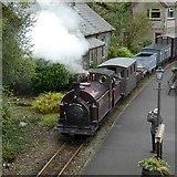 SH6441 : Palmerston at Tan-y-Bwlch by Gerald England