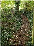 SX9066 : Path to Barton Hill Way by Derek Harper