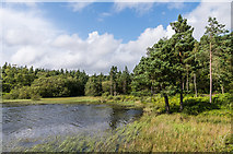 NU0702 : Nelly's Moss South Lake by Ian Capper