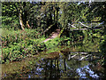 SK0048 : Caldon Canal in Booth's Wood near Consall, Staffordshire by Roger  Kidd