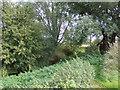 TL9227 : River Colne near Fordham Bridge by Adrian Cable