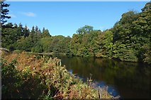 NS3977 : The River Leven from Dalquhurn Point by Lairich Rig