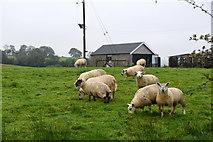 H5064 : Sheep grazing, Moylagh by Kenneth  Allen