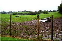 H5064 : A muddy field, Moylagh by Kenneth  Allen