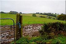 H5064 : Muddy, Moylagh by Kenneth  Allen