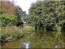 SJ9949 : River Churnet north-east of Consall in Staffordshire by Roger  Kidd
