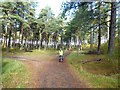 NO4927 : Path junction in Tentsmuir Forest by Oliver Dixon