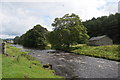 SD8162 : Ribble Way beside the River Ribble by Bill Harrison