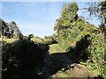 S7138 : Rural Lane by kevin higgins