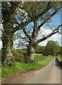 ST5211 : Trees along Pendomer Road by Derek Harper