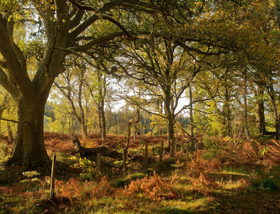NH5043 : Woodland above the River Beauly by Julian Paren