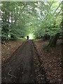 NT5032 : Borders  Abbeys  Way  through  Dod  Plantation by Martin Dawes