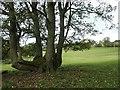 NY5245 : Multi-trunked tree at Bascodyke Foot by Christine Johnstone