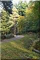 SU2112 : Forest track in Sloden Inclosure by David Martin