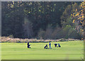 NT3338 : Golfers at Innerleithen by Jim Barton