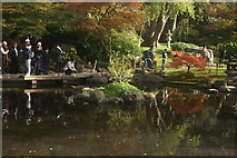 TQ2479 : View of the pond in the Kyoto Gardens in Holland Park #6 by Robert Lamb